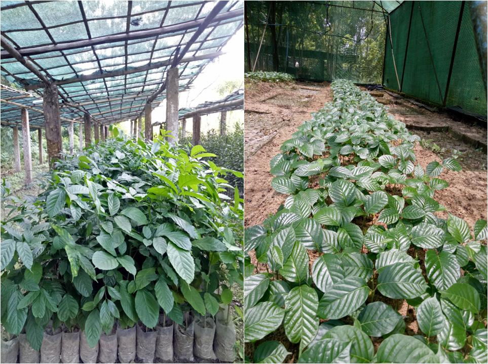 Host Plant